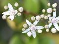 800 Macro flores maceta Combinado)-1ME
